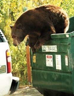 Bear activity has increased in recent days in the town of Breckenridge as the winter hibernation season draws near. The Breckenridge Police Department is reminding residents to take steps to keep bears out of local trash cans.