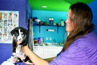 Becky Knight, a volunteer with the Hope for Animals rescue, is fostering the litter at her dog wash and grooming business in DIllon.