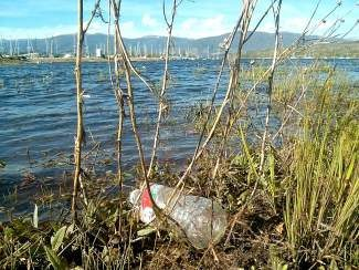 Pitch in and help keep the shore of Lake Dillon clean.