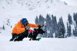 A trainer works with an avalanche dog during a round of training at Arapahoe Basin on Jan. 1. The event is one of several avalanche seminars held at A-Basin through the season, including this weekend's Beacon Bowl.