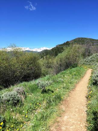 An early portion of the Blair Witch trail shortly before it crosses with the Colorado Trail.