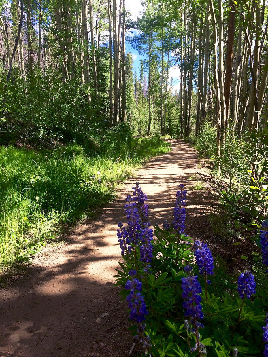 Blooming wildflowers on the Breckenridge section of Peaks Trail.