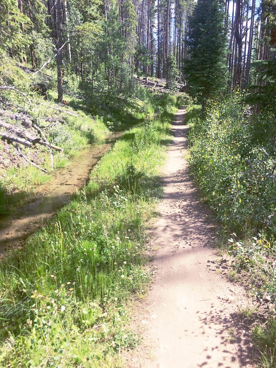 Sun-drenched singletrack on the Peaks Trail between Breckenridge and Frisco.