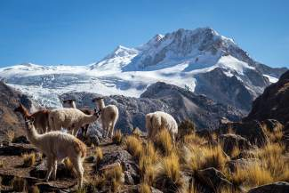 A group of llamas high in the Bolivian Andes, where Summit local Nate Hills and a small crew recently completed a first traverse of several passes above 15,500 vertical feet. For nine days, the crew rode on unmapped routes with hardly any people — just llamas and alpacas for days at a time.