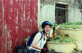 Breck local Amanda Seidler samples the chardonnay grapes during a harvest in Burgundy, France. For three summers Seidler was a bike guide in the region.