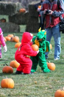 """Pumpkin Fest will take place on the Silverthorne Pavilion North Lawn on Sunday from 11 a.m. to 2 p.m. The pumpkin patch is free, and there will be more than 1,200 pumpkins this year. """"We had 750 pumpkins last year and did not run out until the very end, so we are really hoping that the pumpkins last and that there will be one available per child through the afternoon,"""" said Blair McGary, pavilion coordinator. For more information about the event, visit http://silverthorne.org."""