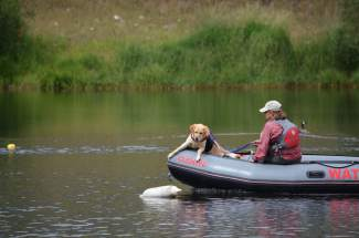 Race, a 7-year-old Labrador, eyes a buoy on North Pond in Silverthorne. Cadaver-detecting dog and owner Andrea Reller assisted with a missing persons case, which was resolved with the recovery of a body on Tuesday, July 19, earlier this week.