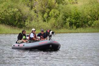 Yinnie, a 4-year-old Border Collie guided by owner Marcia McMahon, leads members of Summit County's Water Rescue Team during an operation to locate a body at Silverthorne's North Pond on Tuesday, July 19.