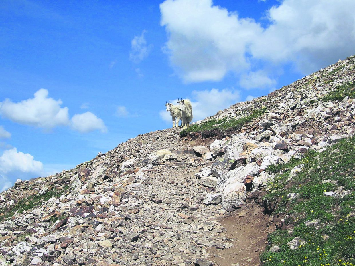 """The most straightforward 14ers are commonly referred to as """"walk-ups"""" because they require no specific skills besides just handling the altitude gain and strolling up a well-maintained and obvious dirt path. These trails are ranked Class 1 or 2 (of 5) and generally considered """"easy."""""""