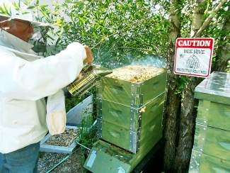 Local beekeeper Larry Gilliland came to the Board of County Commissioners Meeting on Tuesday in support of new farming regulations that allow a limited number of chickens, goats and bees on residential property.