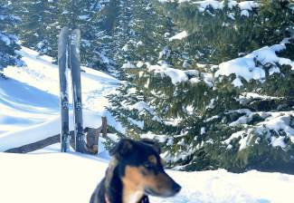 The Rocky Mountain Underground Carbon Apostle ski (plus dog) at the base of Baldy Mountain in Breckenridge. The ski is an updated version of the manufacturer's flagship model with carbon inserts to lighten the load for backcountry touring trips.