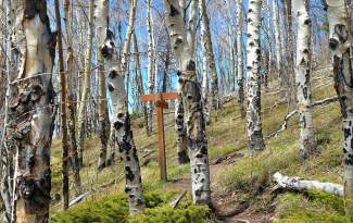 The route through aspens and low brush on the Angler Mountain trail outside of Silverthorne, which skirts along the edge of the Ptarmigan Wilderness.