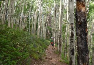 The lush, thick aspen and pine forests on a tunnel-like hike to Mount Royal in Frisco, Colorado.