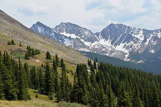 The Three Apostles are visible from tree line on Huron Peak (14,003 feet).