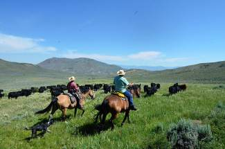Han Smith, left, leads Zoe the dog and other drive participants across the range at the Rusty Spurr Ranch.