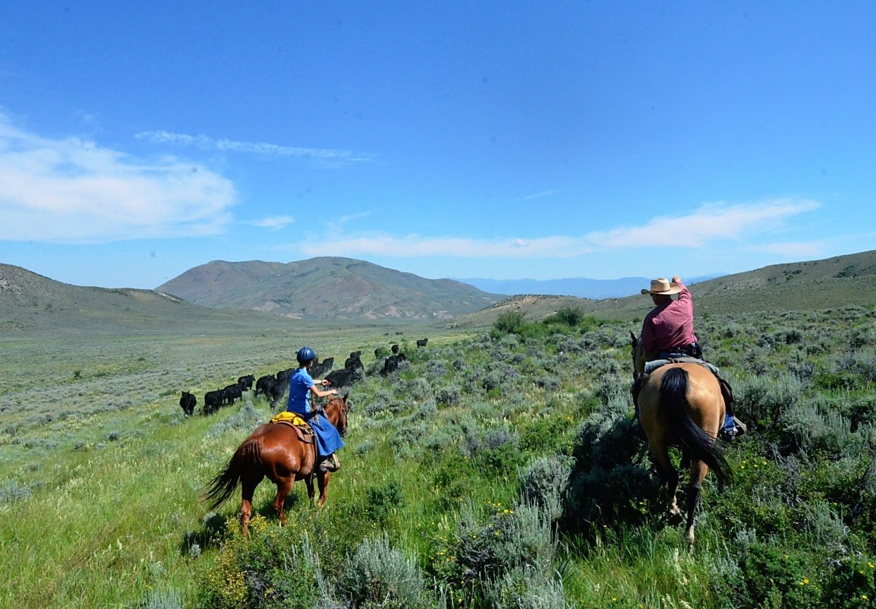 Han Smith, right, points the way for a cattle drive participant as she learns how to get the cows to do what she wants.