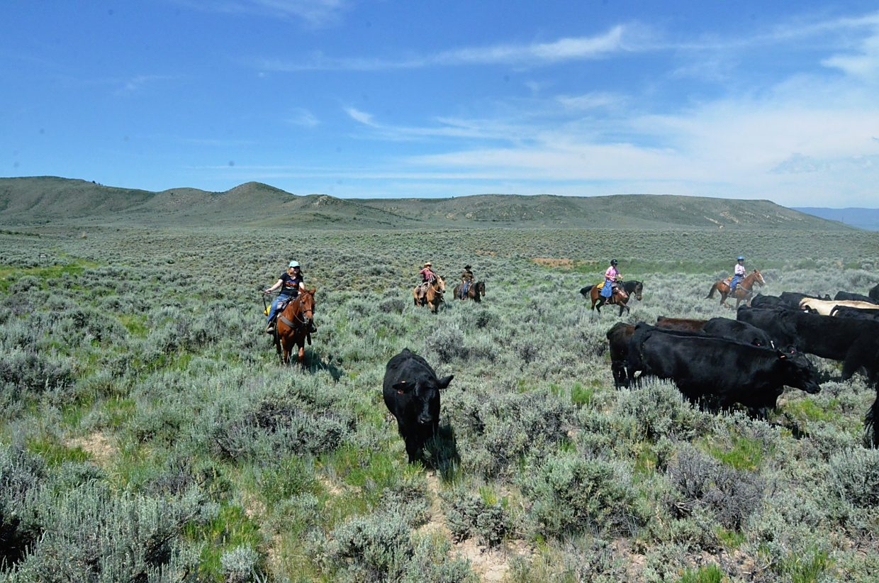 Writer Jessica Smith whoops and snaps her reins at a stray cow during the cattle drive at Rusty Spurr Ranch, just south of Kremmling.