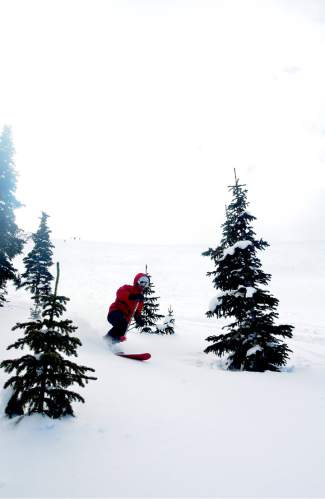 Summit local Devon O'Neil weaves through trees after making wide-open turns at Independence Bowl in Breckenridge early this February. Keystone Adventure Tours offers guided trips (plus a cat transport) to 1,500 acres of maintained terrain on the resort's eastern edge.