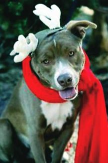 The town of Breckenridge is asking for public feedback about possible breed-specific bans or restrictions.