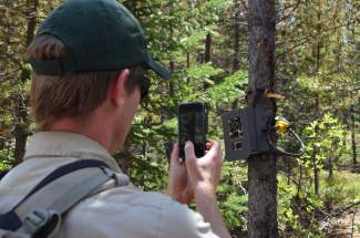 The White River National Forest's Sam Massman takes a cellphone photo of a wildlife tracker during a tour along Summit County's proposed Fremont Recpath on Monday, June 20.
