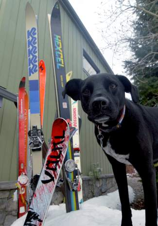 Peter Dunn's skis and dog, Noche, on the snow in his front yard just outside of Frisco. Dunn has lived in Summit County for more than 35 years between Montezuma and Frisco.