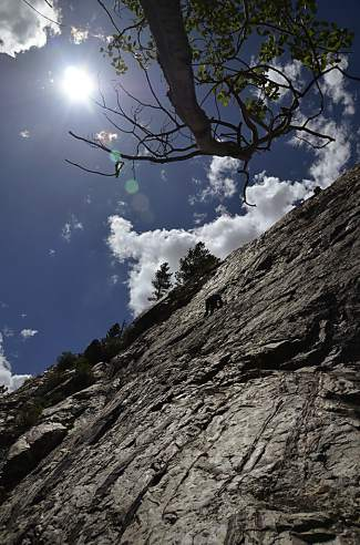 Looking up the rock face at White Cliff, a popular climbing destination in Summit County.