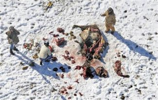 Police investigate the killing of 32 buffalo on or near the property of Jeff Hawn on March 20, 2008, near Hartsel, Colo. (AP Photo/The Denver Post,  RJ Sangosti)