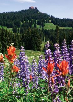 Lupine and Indian paintbrush frame 10,654-foot Rabbit Ears Peak.