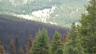 Lake County Office of Emergency ManagementA photo from Saturday shows the burned trees leading up to the fire line held by crews at the Treasure fire near Leadville.