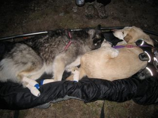 Special to the Daily/SCRG, Denise FairA pair of dogs rest after being rescued earlier