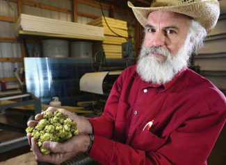 In an Oct. 4, 2012 photo Rich Andrews, of Andrews Family Farm, holds some of the hops he grows on his farm north of Boulder, Colorado. Five years ago, farmer  Andrews decided to try a little experiment by erecting some trellises, installing an irrigation system and planting seven varieties of hops on a 1-acre patch of his 6.5-acre farm.    (AP Photo/The Daily Camera, Mark Leffingwell ) NO SALES