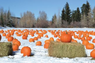 Special to the DailyTwo years ago, there was snow on the ground for pumpkin fest. This year, organizers added a petting zoo, bounce houses and kids' games to the pumpkin hunt.