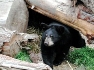 Special to the Daily/Gail Marshall CPW Bear Aware Volunteer program