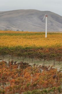 FILE -  In this Oct. 26, 2005, file photo, the Rattlesnake Hills are shown behind the family-owned Kiona Vinyards & Winery in Benton City, Wash. Now that Washington voters have legalized marijuana, will an area recognized as one of the most productive agricultural regions in the world, celebrated for Washington apples, hops and wine grapes, become known as the vice belt? Not necessarily. (AP Photo/Yakima Herald-Republic, Brian Fitzgerald, File)