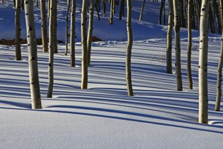 Sun shining through the aspen on the fresh snow last week made for some interesting lights and shadows in Silverthorne.