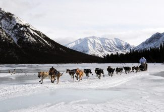 In this March 5, 2013 photo, four-time Iditarod champion Martin Buser leaves the Rohn checkpoint in Alaska during the Iditarod Trail Sled Dog Race.  (AP Photo/The Anchorage Daily News, Bill Roth)