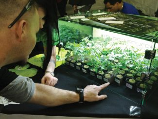 Two vendors at the 2014. Cannabis Cup in Denver inspect a crop of young marijuana plants at the Karmaceuticals booth in the medication area. Nearly all of the Summit County dispnesaries will compete at this year's Cup, held at the Denver Coliseum April 18-20.