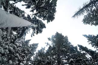 Blankets: The trees and snow at Peak 6 in Breckenridge were still untouched by wind and skis early on Tuesday morning, when the resort opened to 9 inches of fresh and falling snow.