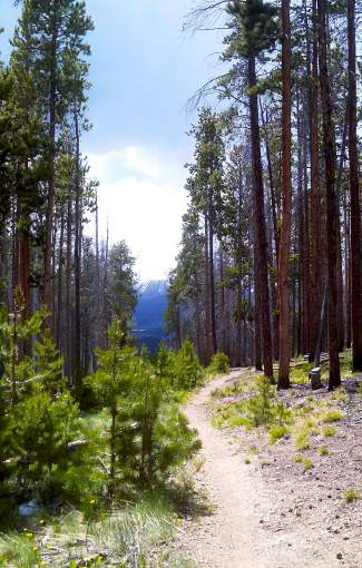 The Oro Grande Trail takes early-season hikers through meadows, evergreens and aspen stands on the southern face of Tenderfoot Mountain outside of Dillon.