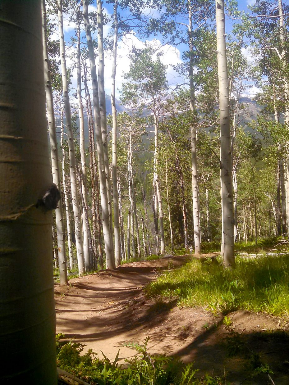 The views from Aspen Alley, the Town of Breckenridge's most recent trail project in the Boreas Pass area. The trail was upgraded in fall 2014 to include berms and stone bridges.