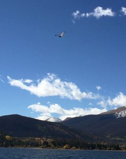 Dillon Reservoir eagle chick, long marooned on island, finally takes flight