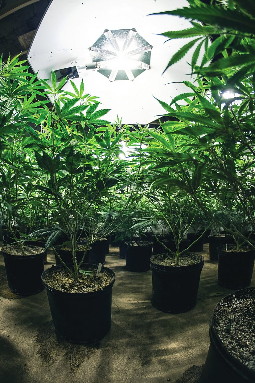 How much does it cost to open a marijuana store?