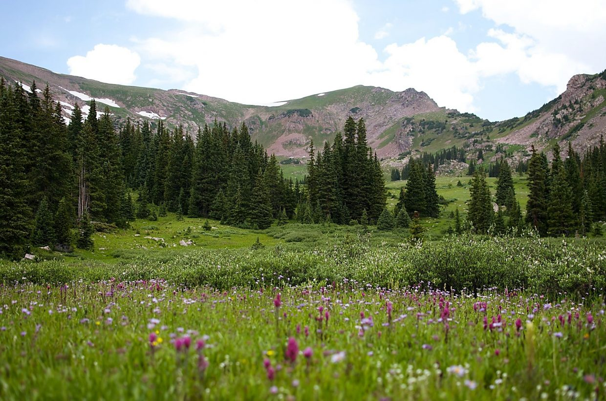 A blanket of wildflowers in the serene alpine meadows surrounding Meadow Creek Trail, found right off of Interstate 70 on the far west end of Main Street Frisco.