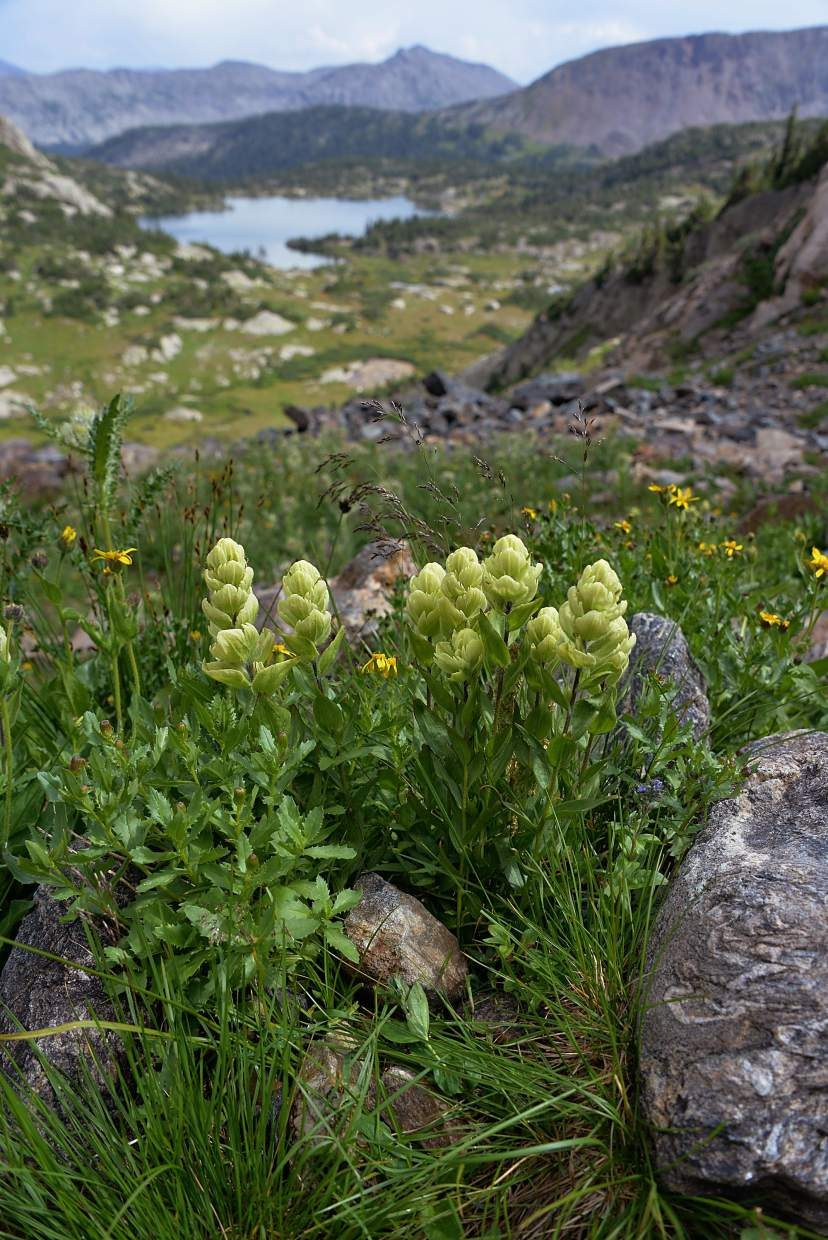 Paintbrush blooms in clusters above Missouri Lakes.