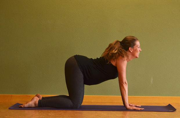 Cow pose for prenatal yoga.