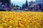 "The Great Rubber Duck Race is one of several annual fundraisers for The Summit Foundation. This year, Dec. 6 is Colorado Gives Day. The theme is ""Give Where You Live"" and it encourages philanthropy in Colorado through online giving. Summit County has nearly 100 charitable and nonprofit organizations working on a variety of causes."
