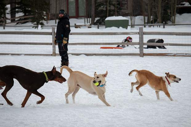 Everybody was loving the snow this week, even the dogs who were playing at the Carter Park Dog Park in Breckenridge.