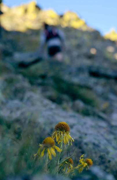 A patch of high-alpine flowers peeks out from behind boulders between Peak One (12,805) and Tenmile Peak (aka Peak Two 12,933 feet).