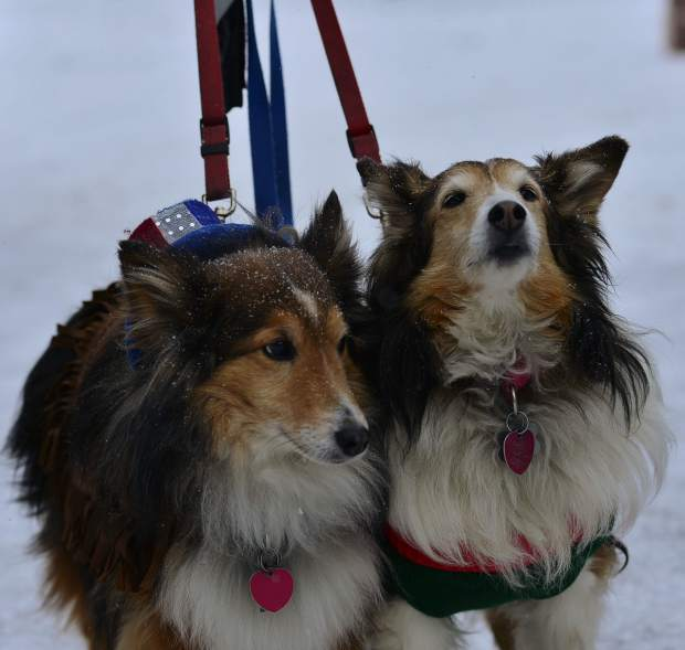 Sir Fur, left, and Lady Fur, owned by Judy Meek, pose for a photo during the fourth annual Mardi Gras 4Paws dog parade Saturday in Frisco.