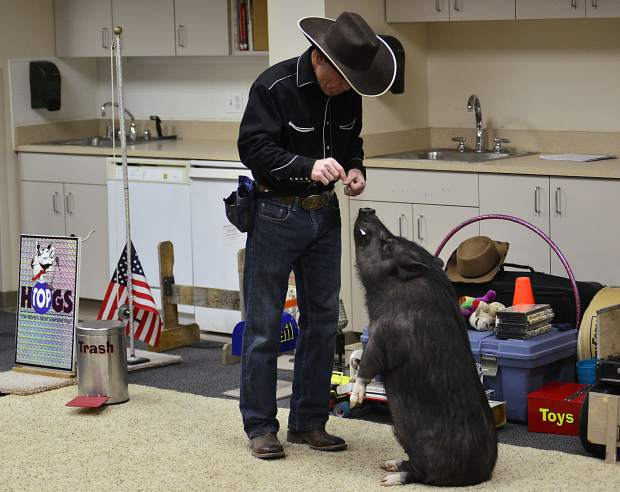 Digger stands up on his hind legs for trainer John Vincent during the Top Hogs animal trick show Wednesday in Frisco.